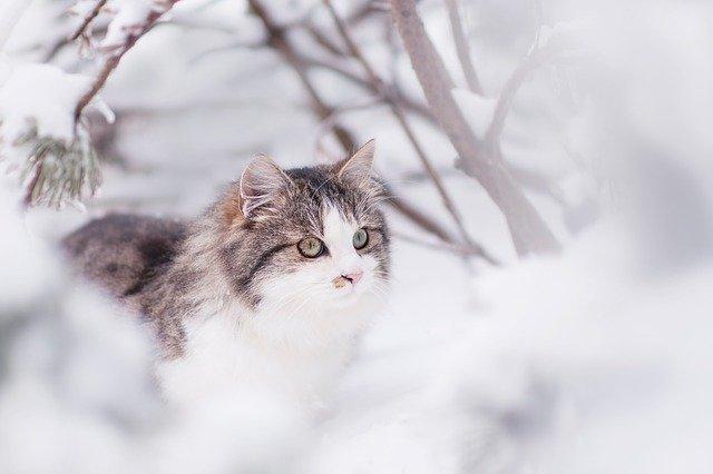 chat, matou, hiver