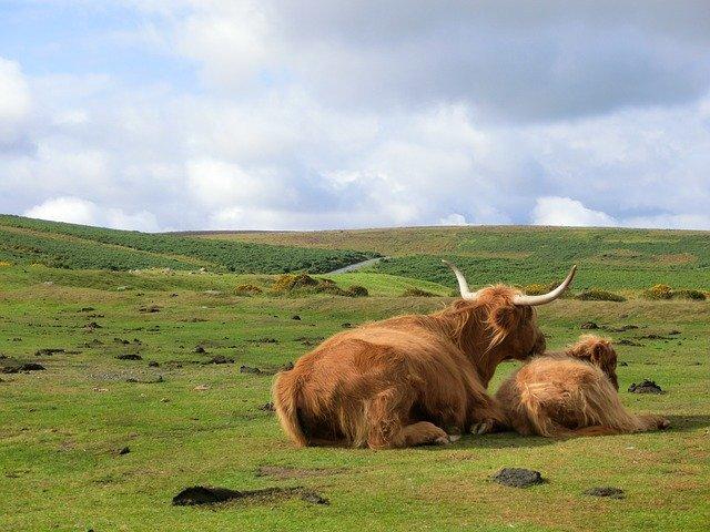 dartmoor, angleterre, royaume uni